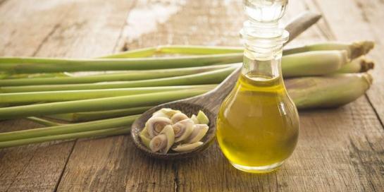 Minyak sereh, si wangi yang memiliki banyak manfaat kesehatan.