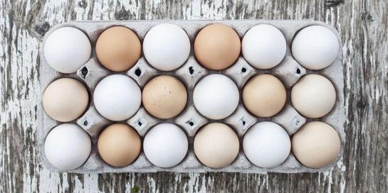 Manfaat telur ayam kampung dianggap lebih banyak dibanding telur ayam ras.