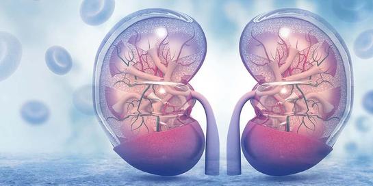 Makanan untuk ginjal sehat perlu diperhatikan agar tehindar dari gangguan ginjal