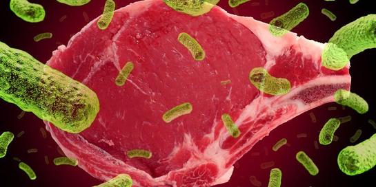Bakteri salmonella bisa menyebabkan diare, tifus, hingga infeksi salmonellosis