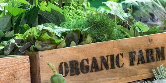 Tidak selamanya sayuran organik sehat