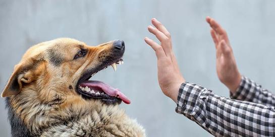 Selain gigitan anjing, ada gigitan hewan lainnya yang menjadi penyebab rabies