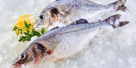 Mengetahui ciri-ciri ikan segar sangat penting untuk mengurangi risiko kontaminasi makanan