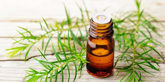 Salah satu obat jamur kuku alami yang bisa Anda coba di rumah adalah tea tree oil