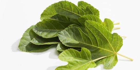 Manfaat daun tin ada beragam mulai dari turunkan gula darah hingga cegah TBC
