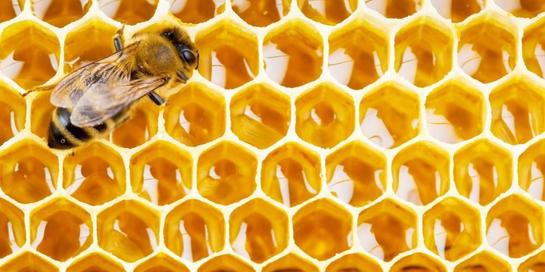Honeycomb adalah bagian dari sarang lebah yang keras teksturnya.