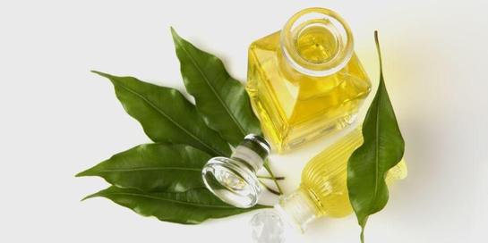 Ada banyak manfaat daun cengkeh bagi kesehatan
