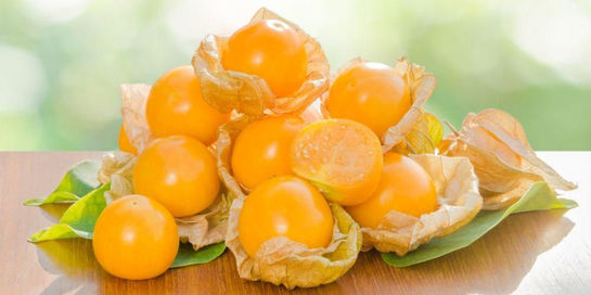 Jangan remehkan manfaat buah ciplukan untuk kesehatan