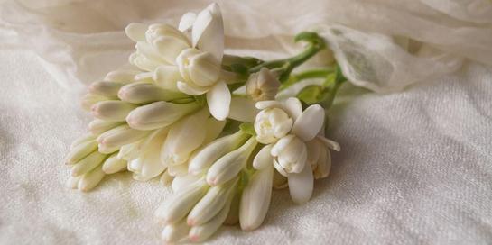 Bunga sedap malam dapat digunakan sebagai dekorasi