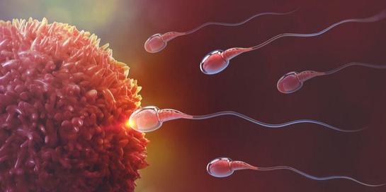 Sel sperma dan sel telur bergabung dalam proses fertilisasi untuk membentuk organisme baru