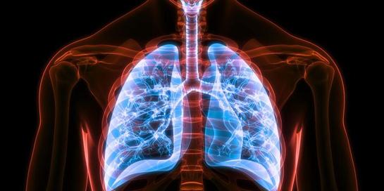 Proses respirasi manusia melibatkan banyak proses rumit