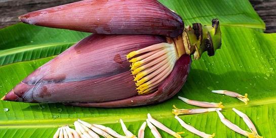 Manfaat jantung pisang untuk kesehatan ternyata ada beragam