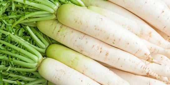Ada banyak manfaat lobak putih bagi kesehatan