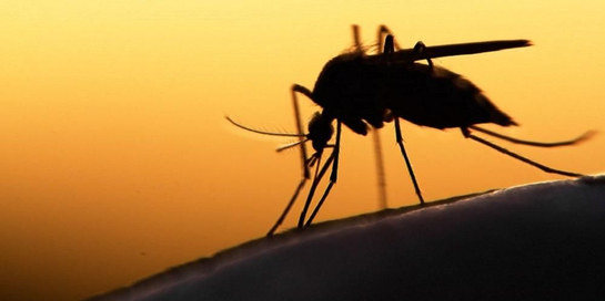 Penyakit endemik di Indonesia antara lain DBD, malaria, dan kaki gajah