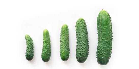 Penumpukan lemak terutama di bagian perut bawah akan membuat penis tampak mengecil