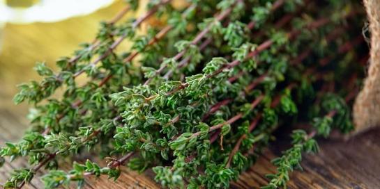 Thyme adalah penyedap rasa dan herbal dari keluarga mint, yang kaya akan khasiat