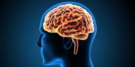 Senam otak berguna untuk meningkatkan fokus, organisasi, dan komunikasi tubuh