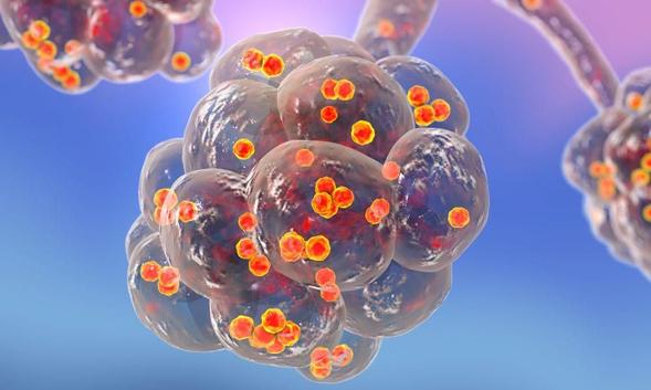 Ceftazidime digunakan untuk menghambat pertumbuhan bakteri
