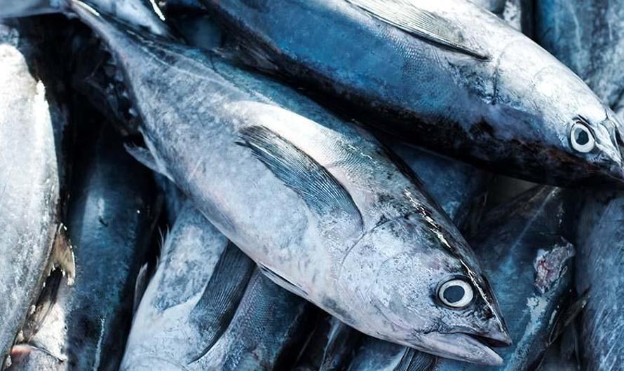 Agar Si Kecil Sehat, Kenali Manfaat Ikan Tuna untuk Bayi Beserta ...