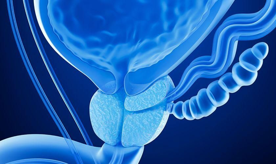 Kenali Lebih Jauh Mengenai Kelenjar Prostat untuk Jaga Kesehatannya