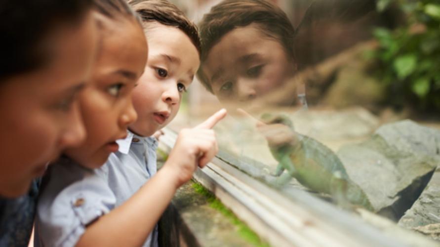 Mendapatkan keleluasaan dalam bereksplorasi dapat mengasah rasa ingin tahu anak.