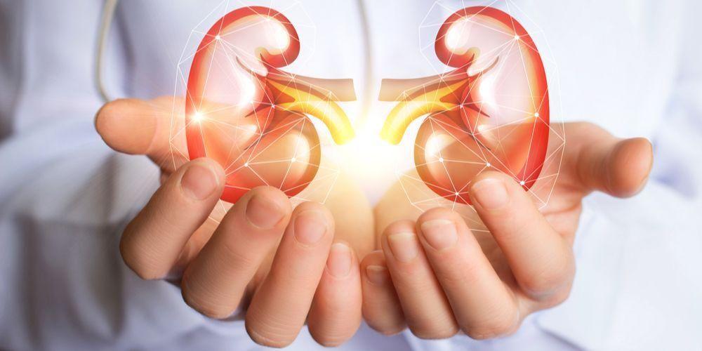 Cara menjaga kesehatan ginjal perlu dilakukan agar organ ini dapat berfungsi dengan optimal