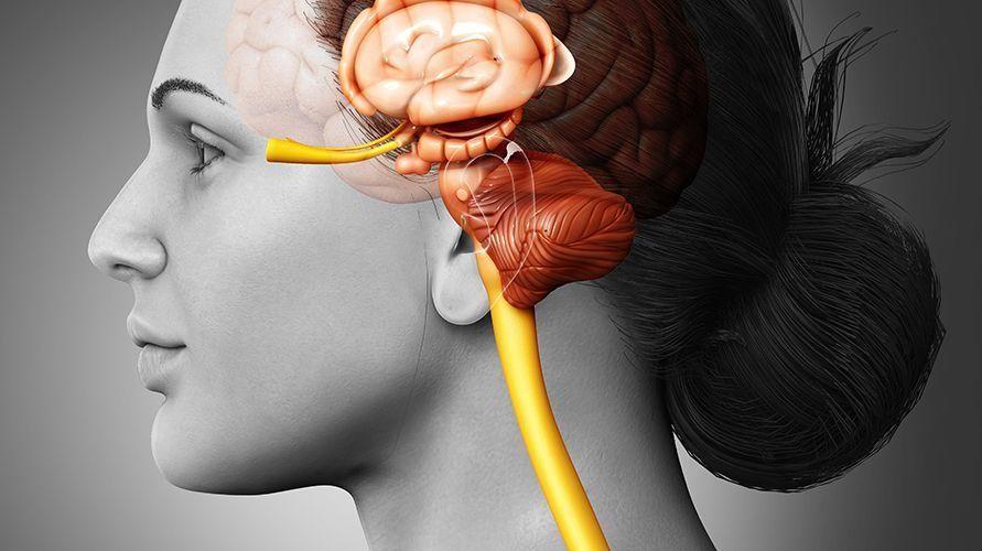 Pineal gland ada di dalam pusat otak