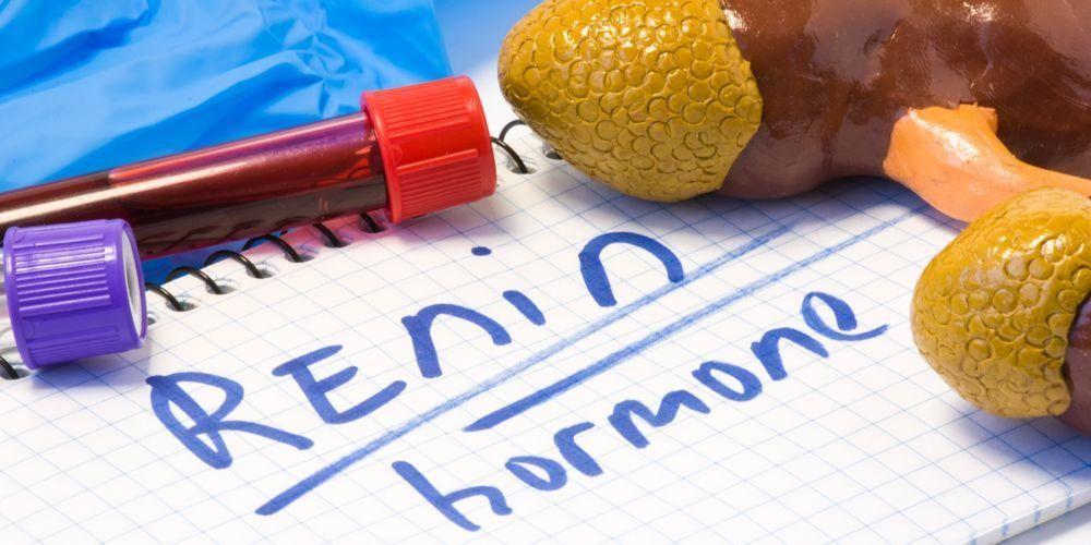 Enzim renin juga dapat menyebabkan tekanan darah tinggi bila terganggu fungsinya