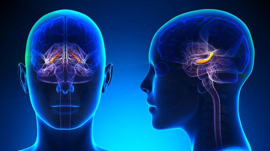 Hipokampus adalah bagian otak yang berperan penting dalam pembentukan, pengaturan, dan penyimpanan memori atau ingatan jangka panjang