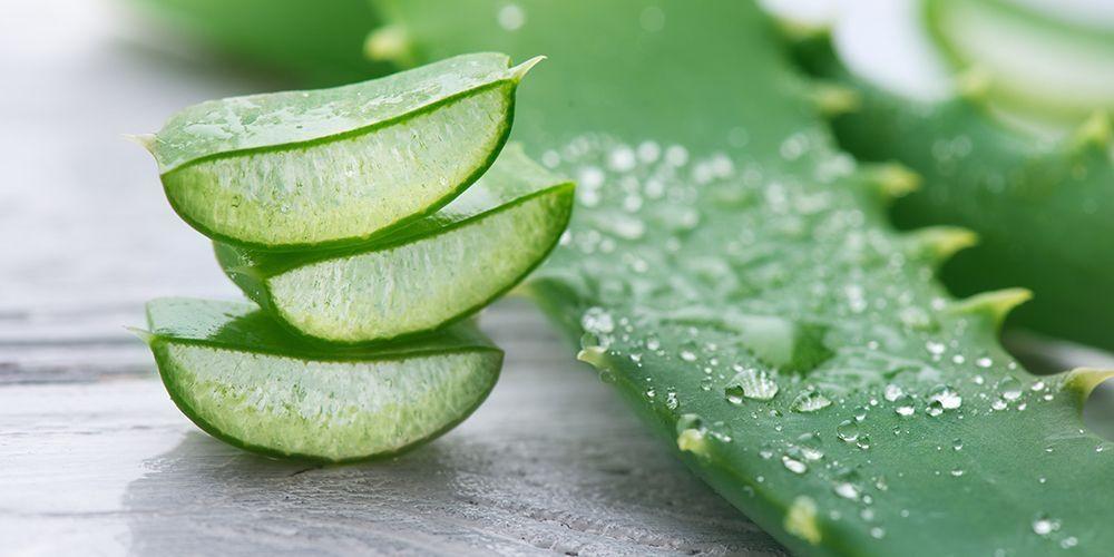 15 Manfaat Lidah Buaya Aloe Vera Untuk Kecantikan Dan Kesehatan