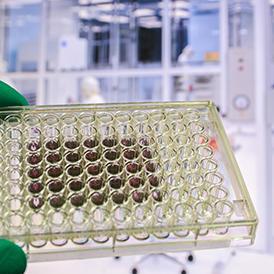 Sitotoksik adalah zat atau proses yang mengakibatkan kerusakan sel